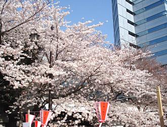 megurogawa2011_2.jpg